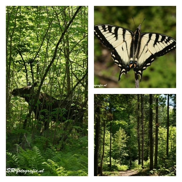 Mauricie Park Canada