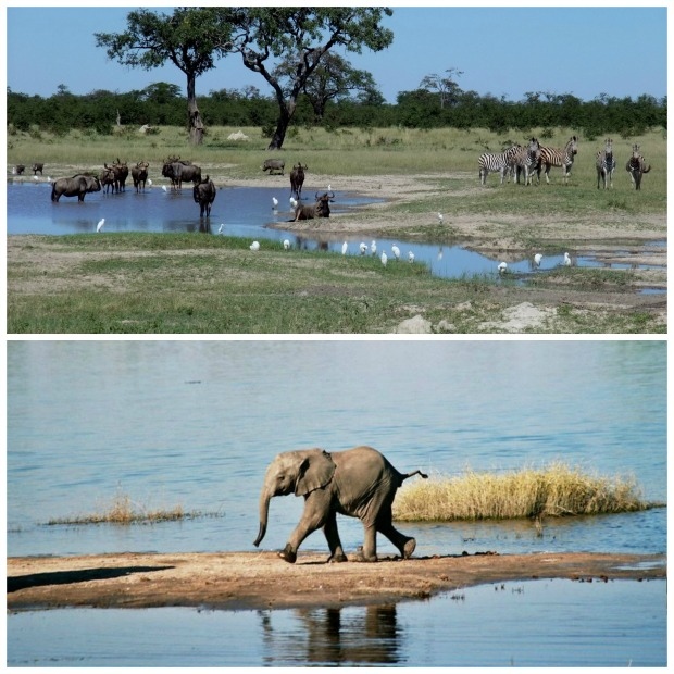 Chobe collage