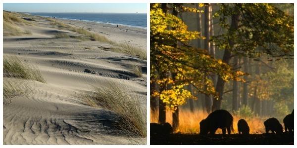 Wandelgebieden Oostvoorne duinen en Hoge Veluwe