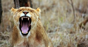 Spannende safari Afrika