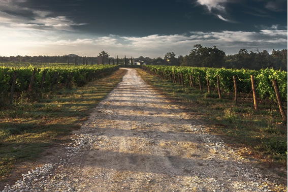 Wijnstreek Empordà