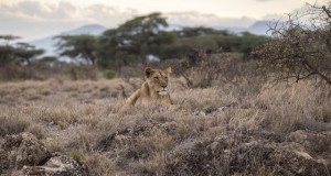 safari bestemmingen afrika