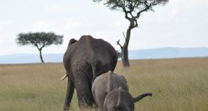 reizen naar afrika
