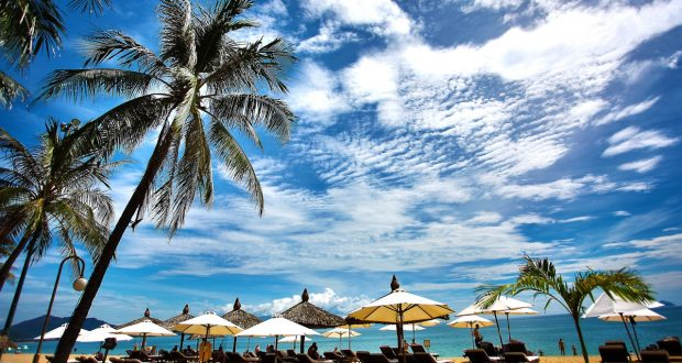 het strand van Brazilië met palmboom