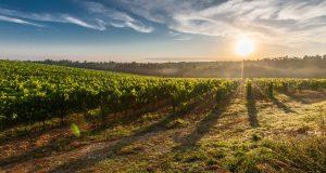 5 wijnroutes europa