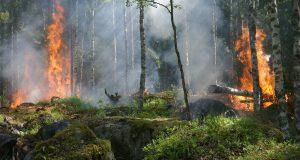 wat te doen bij bosbrand