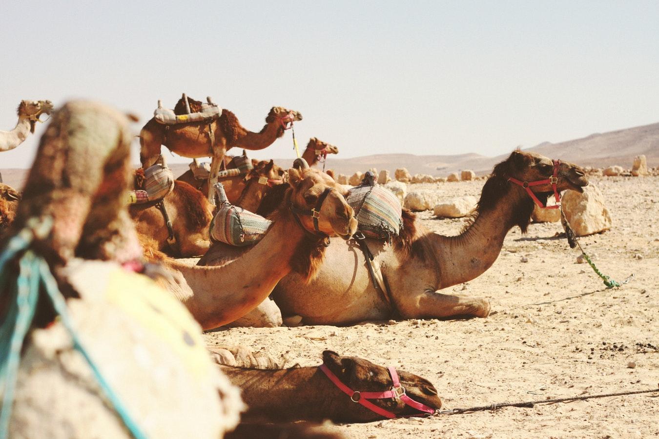 van israel naar egypte over land