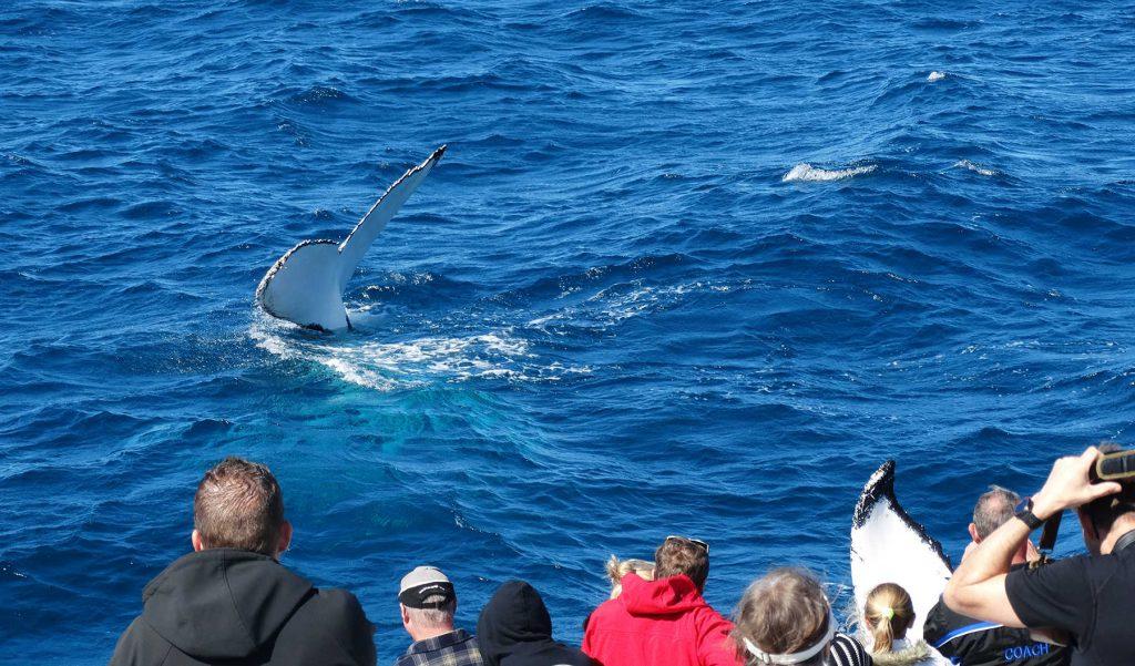 hoogtepunt-australië-walvis-spotten