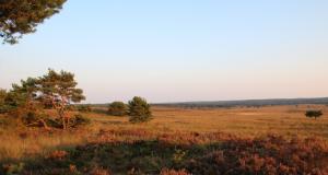 Hotspot in nederland: de veluwe