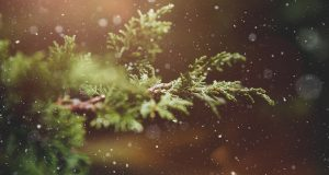 Wat te doen in de kerstvakantie
